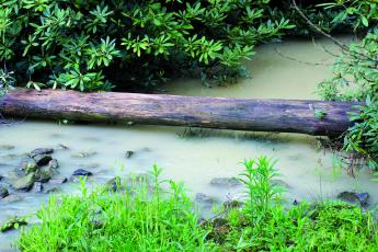 Residents of the Whiteside Forest community have been complaining to county and state officials about the deteriorating water quality of Fowler Creek because of erosion control failures by High Hampton Inn's construction and renovation projects.