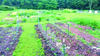 About an acre of diverse people-powered organic veggie production with bee hives and perennials mixed in at the Many Hands Peace Farm. With help from volunteers around the plateau, MHPF will be able to donate additional produce to local food pantries.